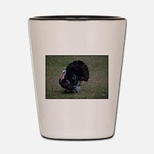 Turkey Showing Off Shot Glass