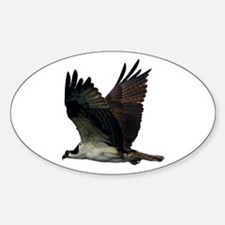 Osprey Sticker (Oval)