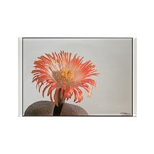 Orange Cactus Flower Rectangle Magnet
