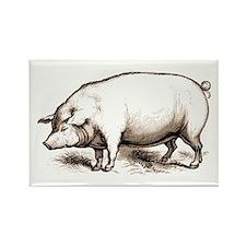 Victorian Pig Rectangle Magnet