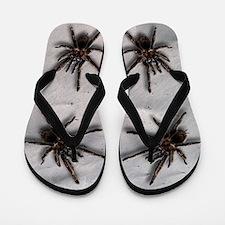 Tarantula Flip Flops