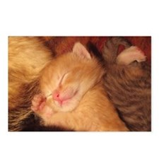 Sleepy little Kitty Postcards (Package of 8)