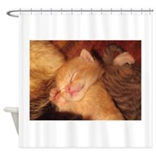 Sleepy little Kitty Shower Curtain