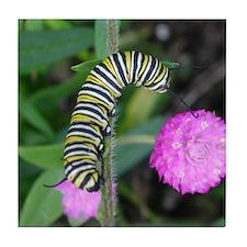 Monarch Caterpillar Tile Coaster