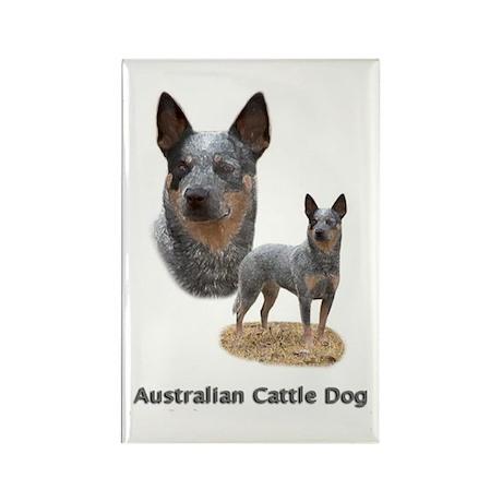 Australian Cattle Dog Magnet