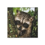 Baby Raccoon Square Sticker 3