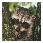 Baby Raccoon Square Car Magnet 3