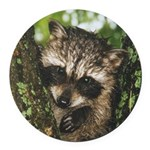 Baby Raccoon Round Car Magnet