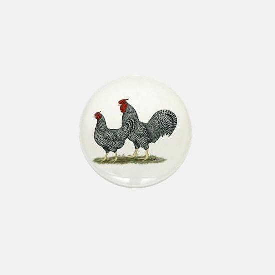 Dominique Chickens Mini Button