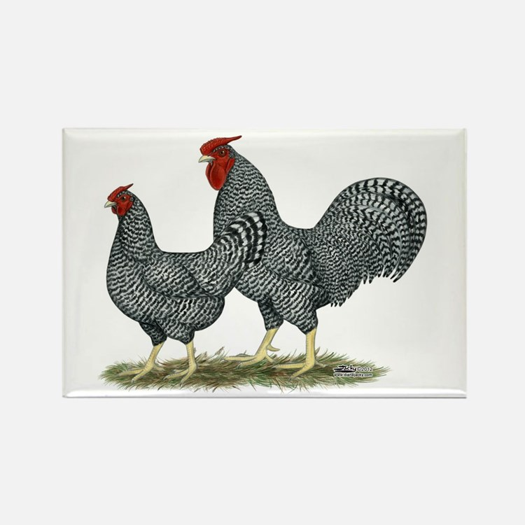 Dominique Chickens Rectangle Magnet