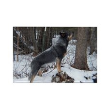 Howling Cattle Dog Magnet