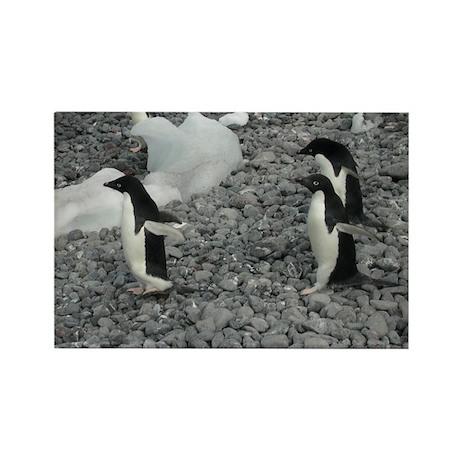 Adelie Penguins Rectangle Magnet
