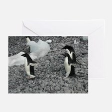 Adelie Penguins Greeting Cards (Pk of 10)