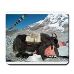 Yak at Everest Basecamp Mousepad