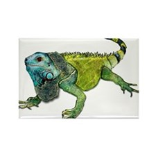 Oh How Iguana Go Home Rectangle Magnet