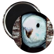 SKY THE PARAKEET Magnet