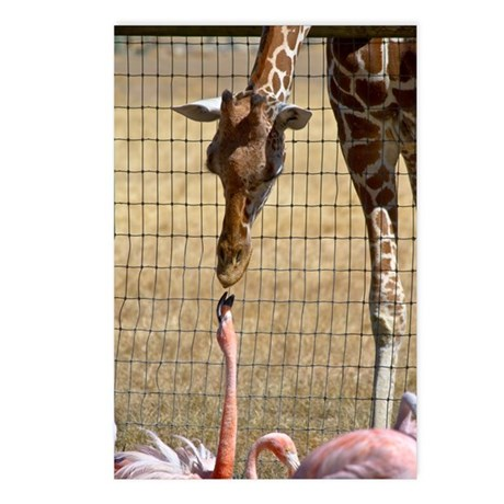 Giraffe and Flamingo Postcards (Package of 8)