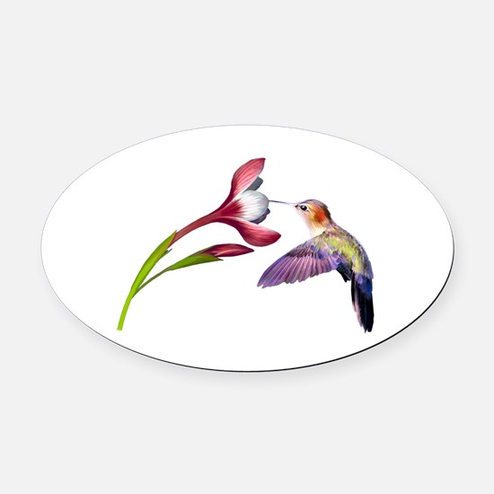 Hummingbird in flight Oval Car Magnet