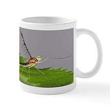 <i>Stenacron</i> Mayfly Mug