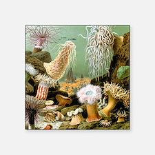 "Giacomo Merculiano Sea Anemones Square Sticker 3"""