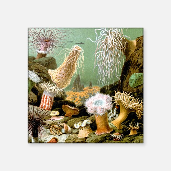 Giacomo Merculiano Sea Anemones Square Sticker 3""