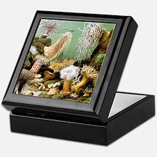 Giacomo Merculiano Sea Anemones Keepsake Box