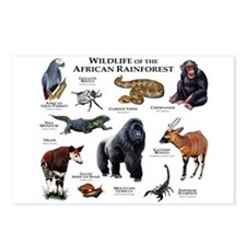 Wildlife of the African Rainforests Postcards (Pac