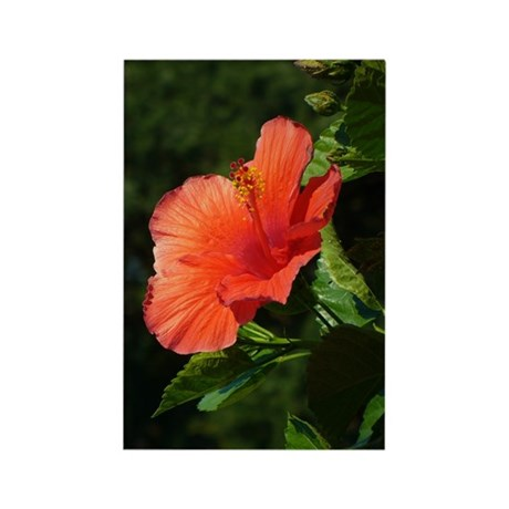 Hibiscus Flower Rectangle Magnet (10 pack)