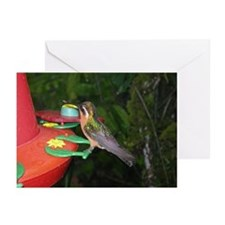 Costa Rica Hummingbirds 4 Greeting Cards (Package