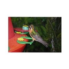 Costa Rica Hummingbirds 4 Rectangle Magnet