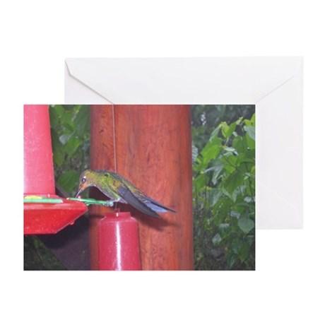 Costa Rica Hummingbirds 6 Greeting Cards (Package