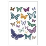 Butterflies Collage Large Poster