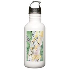Birches Sports Water Bottle