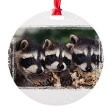 Three Baby Raccoons Ornament