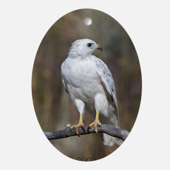 White Hawk 1 Ornament (Oval)