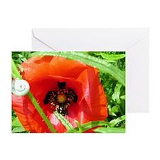 Poppy-Snail Greeting Cards (Pk of 10)