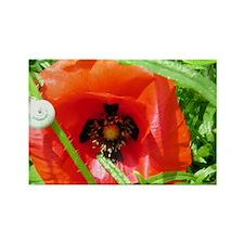 Poppy-Snail Rectangle Magnet