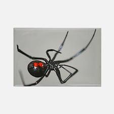 Black Widow Spider Rectangle Magnet