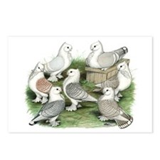 Classic Frill Pigeons Postcards (Package of 8)