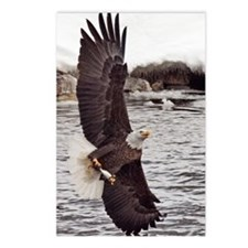 Vertical Eagle Postcards (Package of 8)