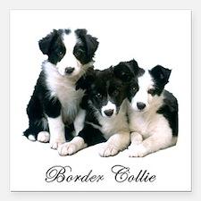 "Border Collie Puppies Square Car Magnet 3"" x 3"""