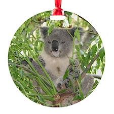 Helaine's Koala Bear Ornament
