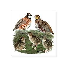 "Bobwhite Family Square Sticker 3"" x 3"""