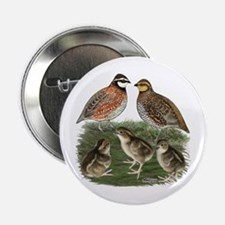 "Bobwhite Family 2.25"" Button"