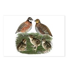Bobwhite Family Postcards (Package of 8)
