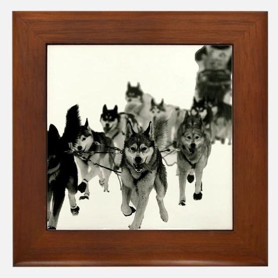 Cute Sled dogs Framed Tile