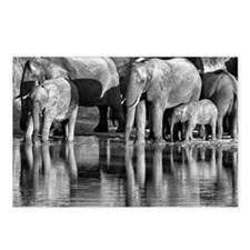 Elephant Reflections Postcards (Package of 8)