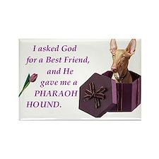 Pharaoh Hound Rectangle Magnet (10 pack)