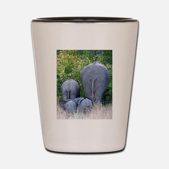 Elephant Roadblock Shot Glass