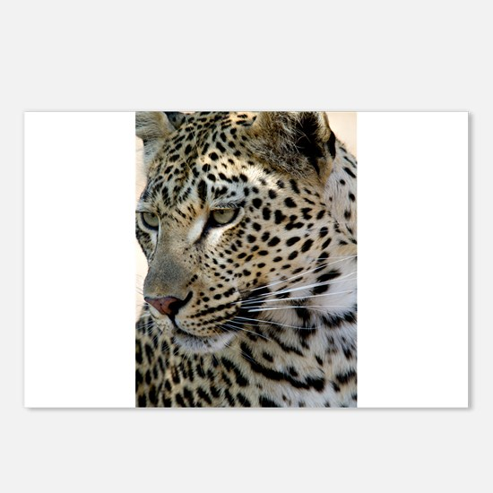 Leopard Profile Postcards (Package of 8)